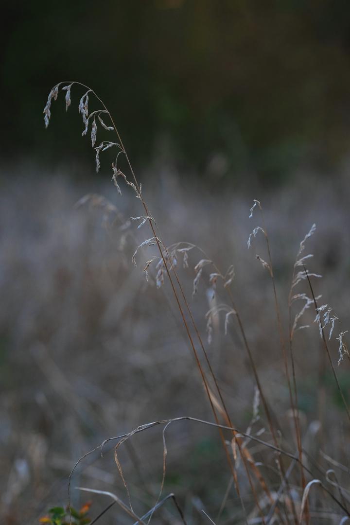 brins d'automne