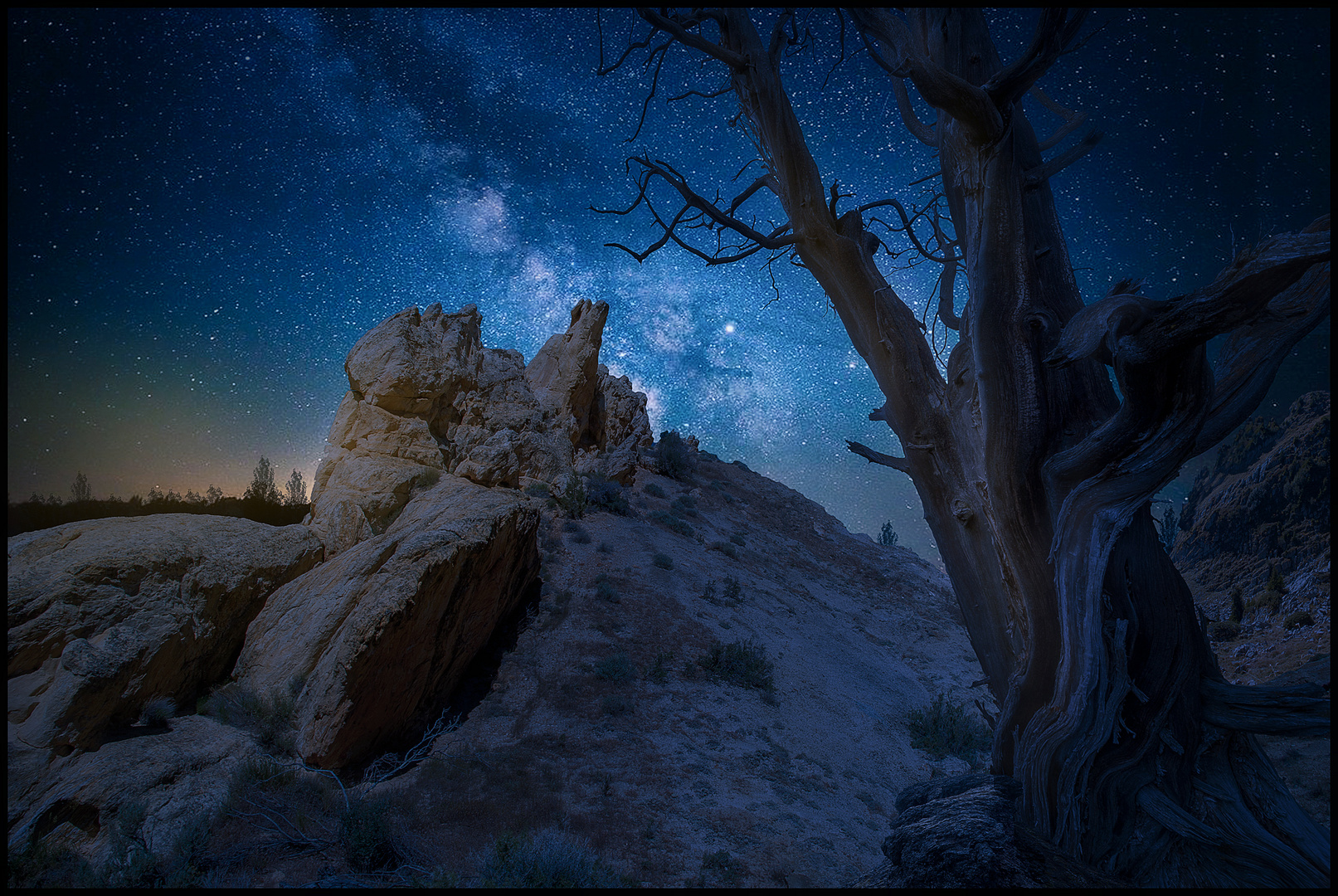 Bristlecone pine White mountains USA
