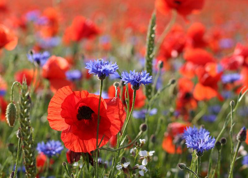 Britain In Bloom