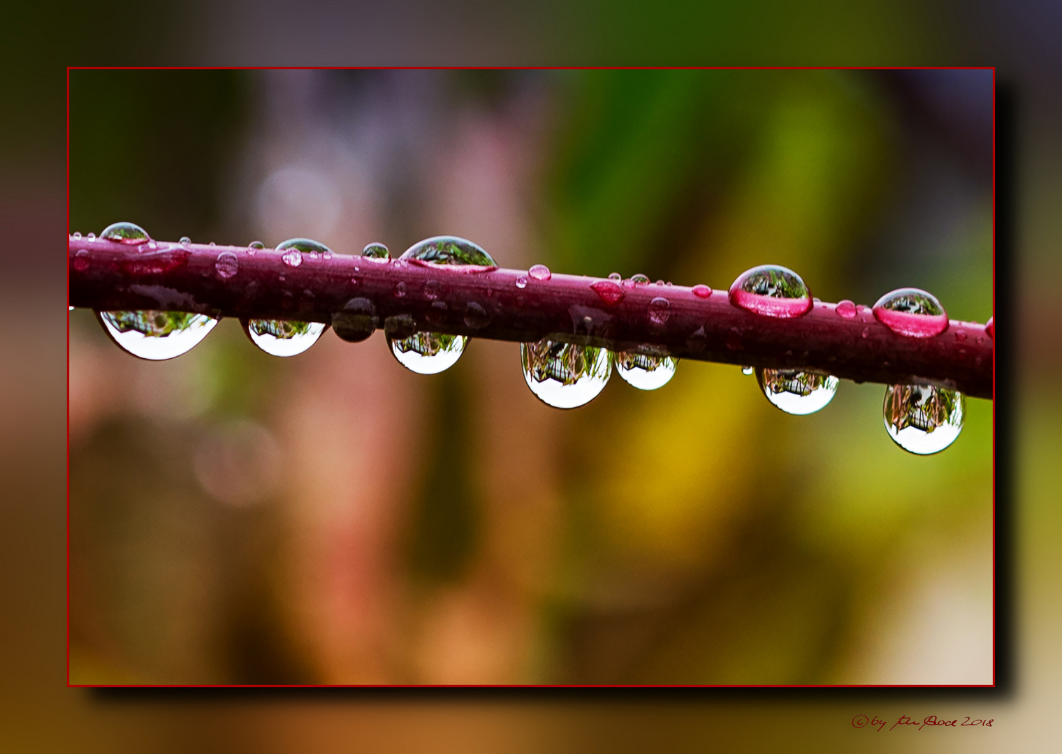 Brittle branch with waterdrops