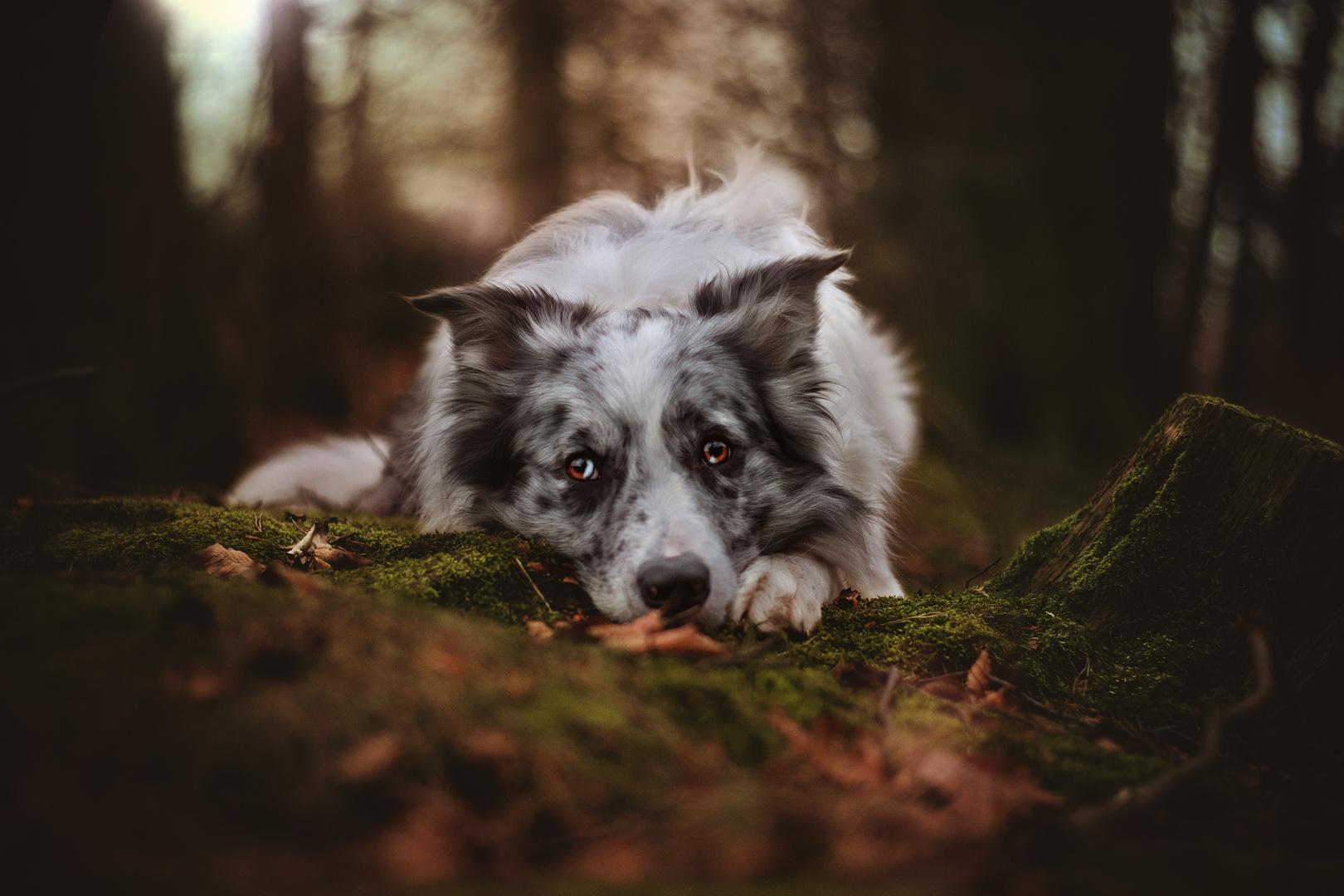 Brösel im tiefen Wald