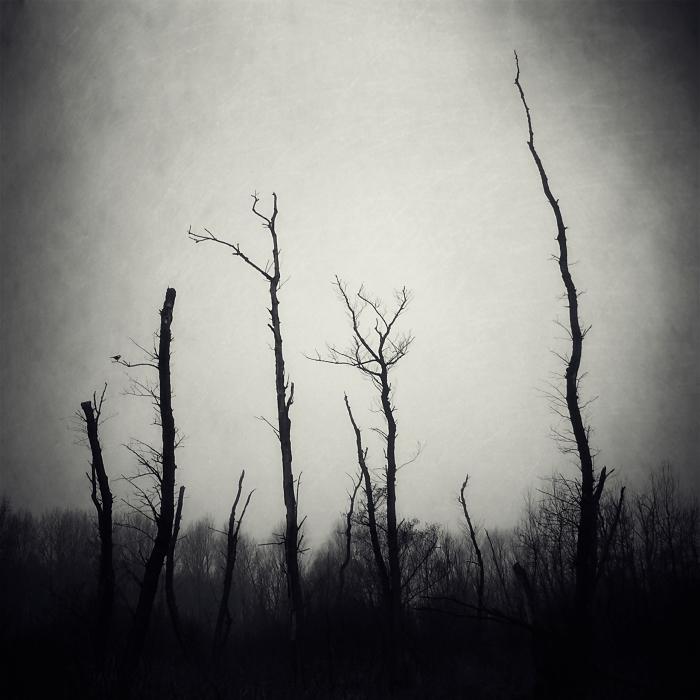 .broken nature