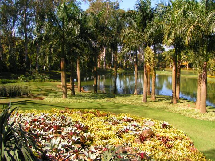 Bromelia's garden by Burle Marx