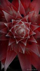 Bromelien Blüte