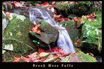 Brook Moss Falls