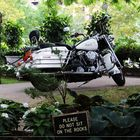Brooklyn Bridge Park - Portrait d'Harley