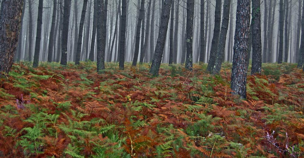 brouillard dans la forêt !