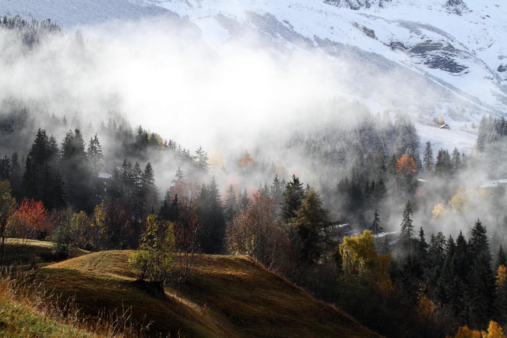 Brouillard entre automne et hiver ....