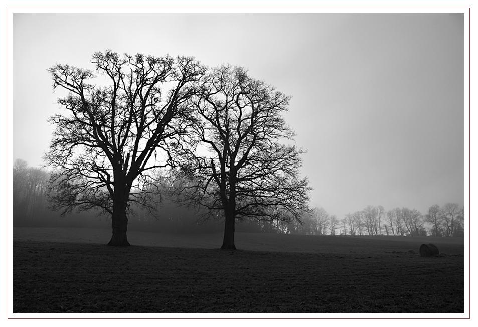 brouillard (II)