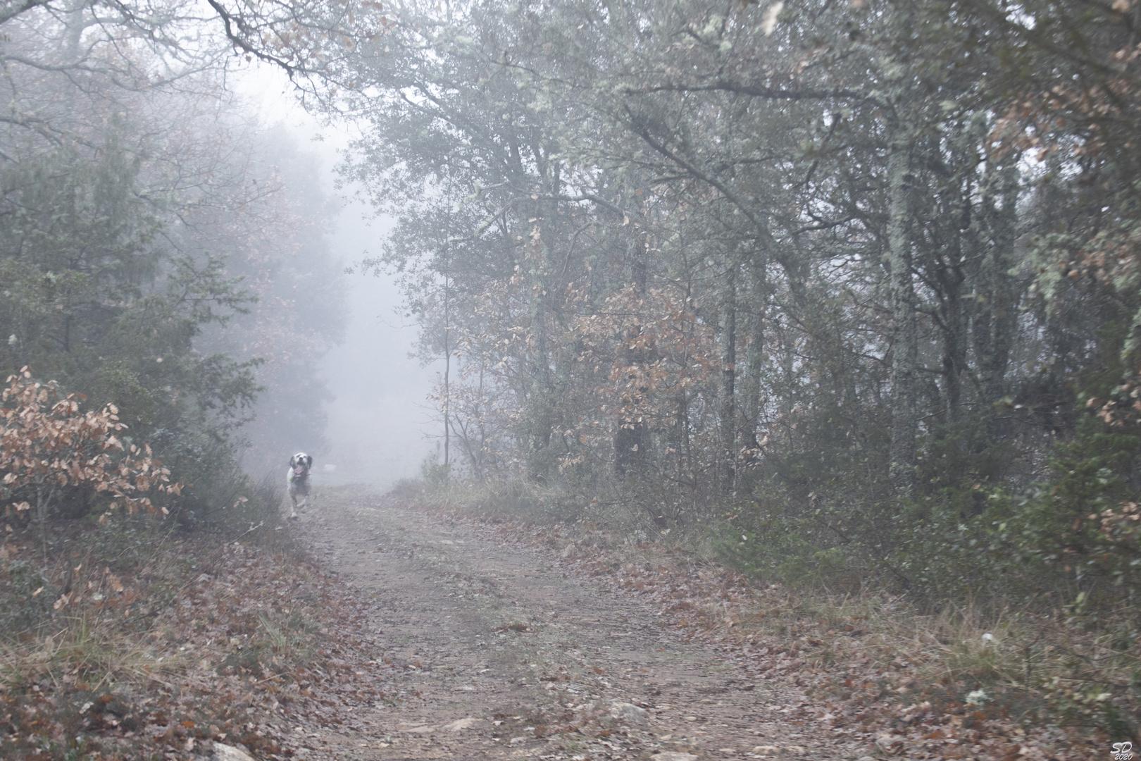 Brouillards matinaux