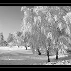 ...brrrrr the winter is coming