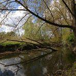 Bruchholz im alten Flussbett