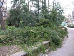 Bruchteil einer Sekunde - Sturm Kyrill in Nachbars Garten....