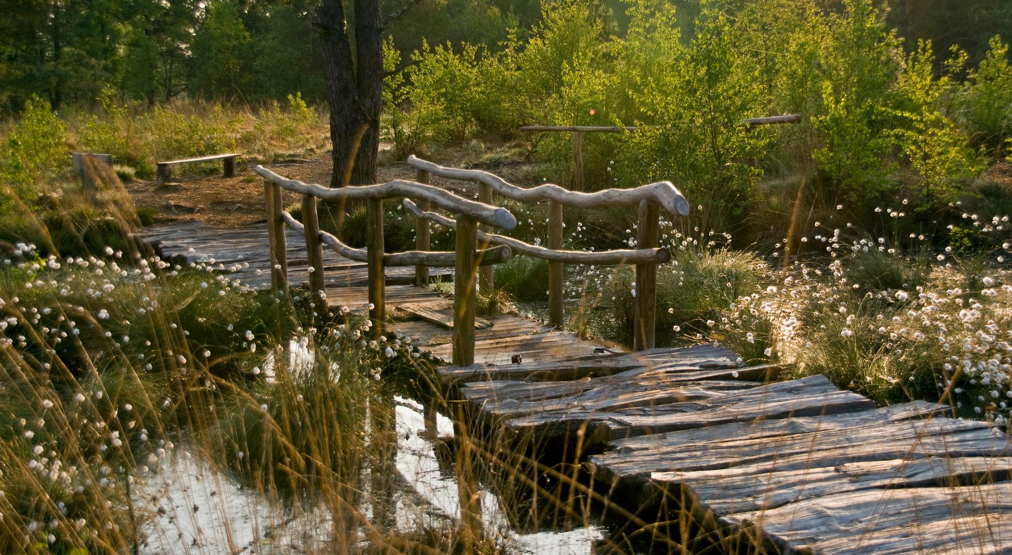 Brücke der Träume umlagert von Wollgras
