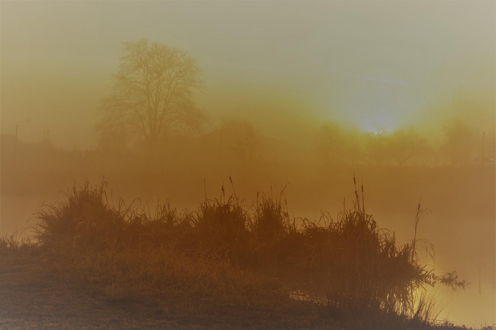 Brume au lever du jour