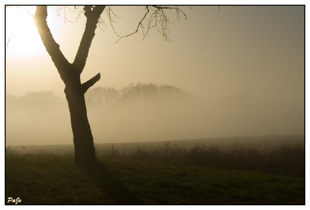 Brume dans la verte campagne vaudoise