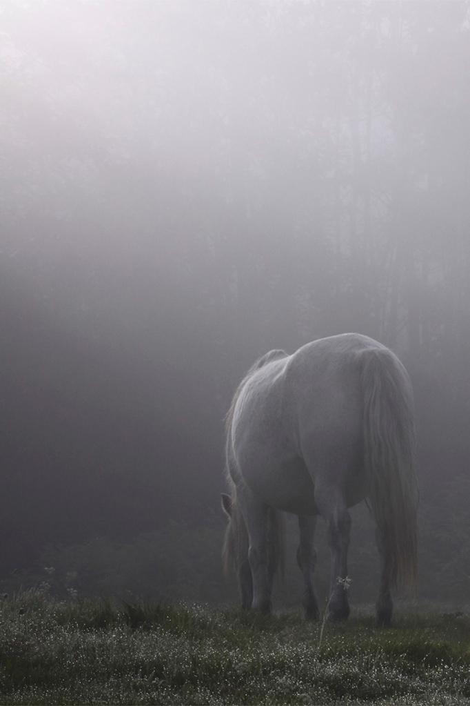 Brume de cheval