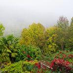 Brume d'octobre au jardin....