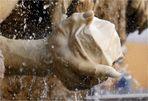 Brunnen an der Hofburg