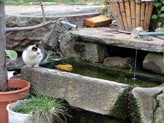 Brunnenkatze