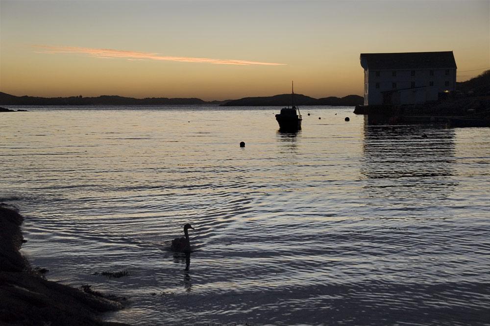 Brunsvika after sunset