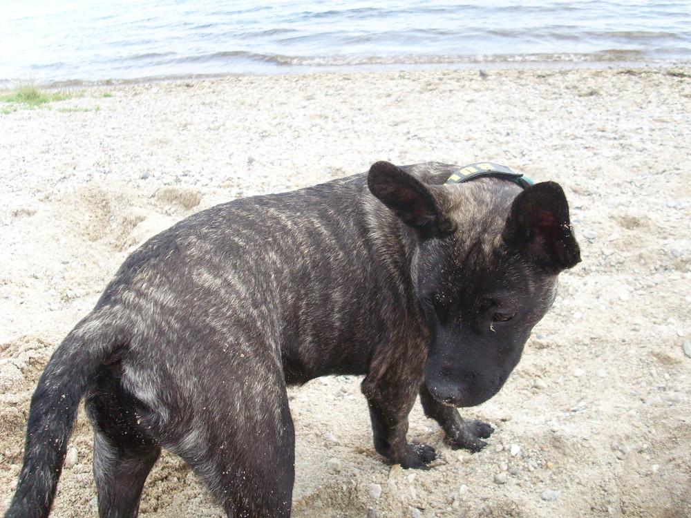 Brutus am Strand