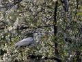 Brutvogel Wien (03) von Othmar W. Mayer