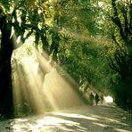 Bucharest - L'automne dans le Jardin de Cismigiu