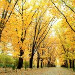 Bucharest - Luce d'autunno