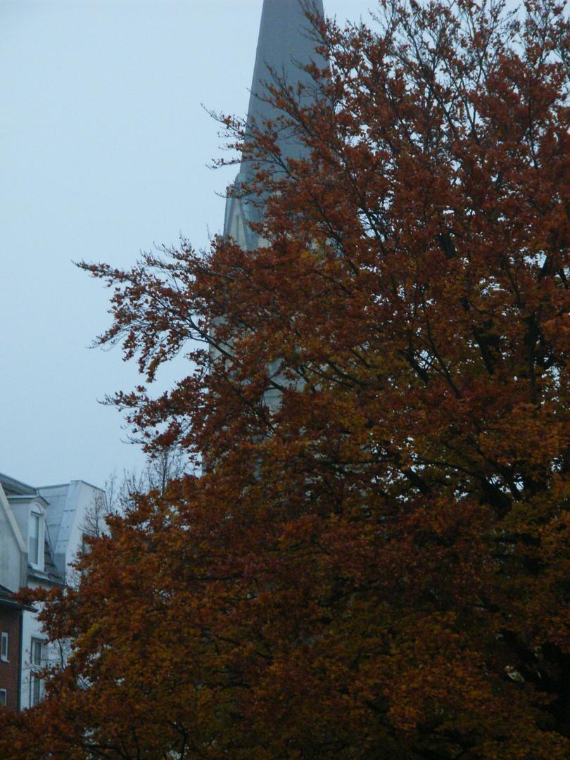 Buche im Herbstkleid