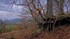 """Buchen am Hutsberg (hayas en la montaña """"Hutsberg"""")"""