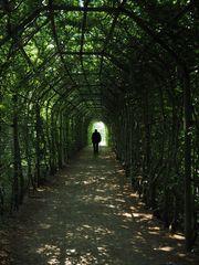 Buchen-Gewölbe