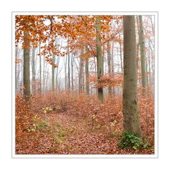 Buchen - Herbst