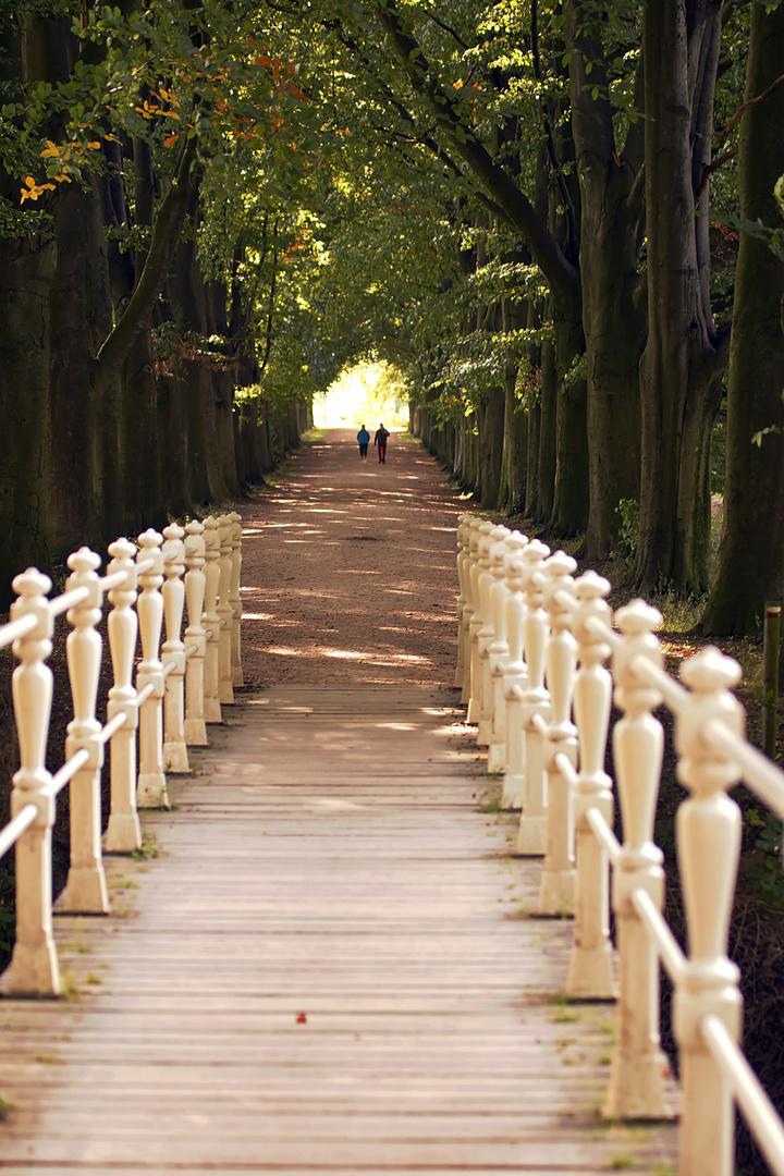 Buchenallee mit Brücke
