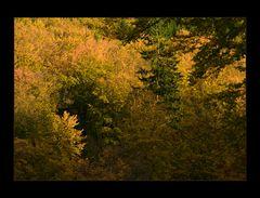 Buchenlaub- Herbst- Komposition...