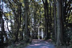 Buchenwald an der Lübecker Bucht