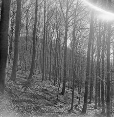 Buchenwald - Sonnenschein II ...