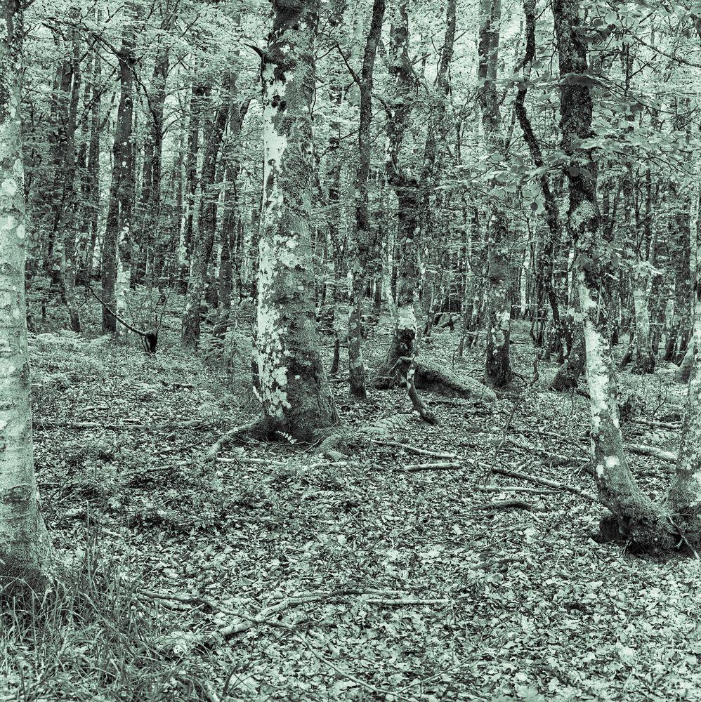 Buchenwaldsommer