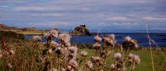 Bucht auf Islay.