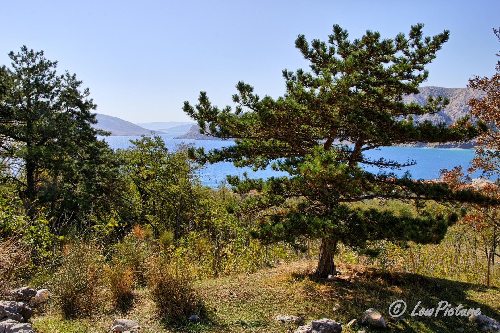 Bucht Baska
