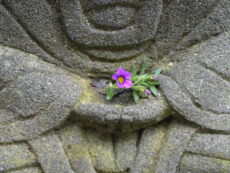 Budda mit Blume