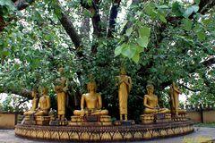 Buddastaturen im Schatten