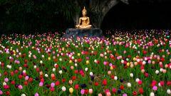 Buddha e tulipani