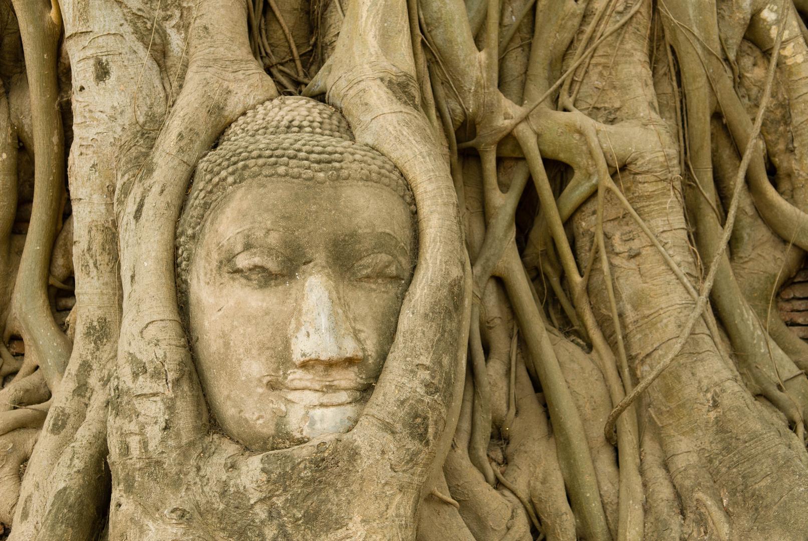Buddha Steinkopf im Wat Mahathat in Ayutthaya