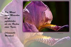 buddhistische Weisheiten (1)