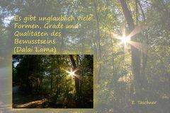 Buddhistische Weisheiten #24