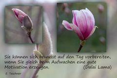 Buddhistische Weisheiten _ 34