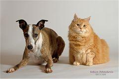 Buddy und Tiger
