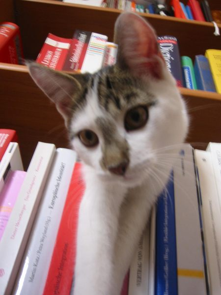 Bücher-Kater