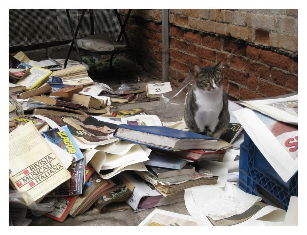 Bücherkatze.